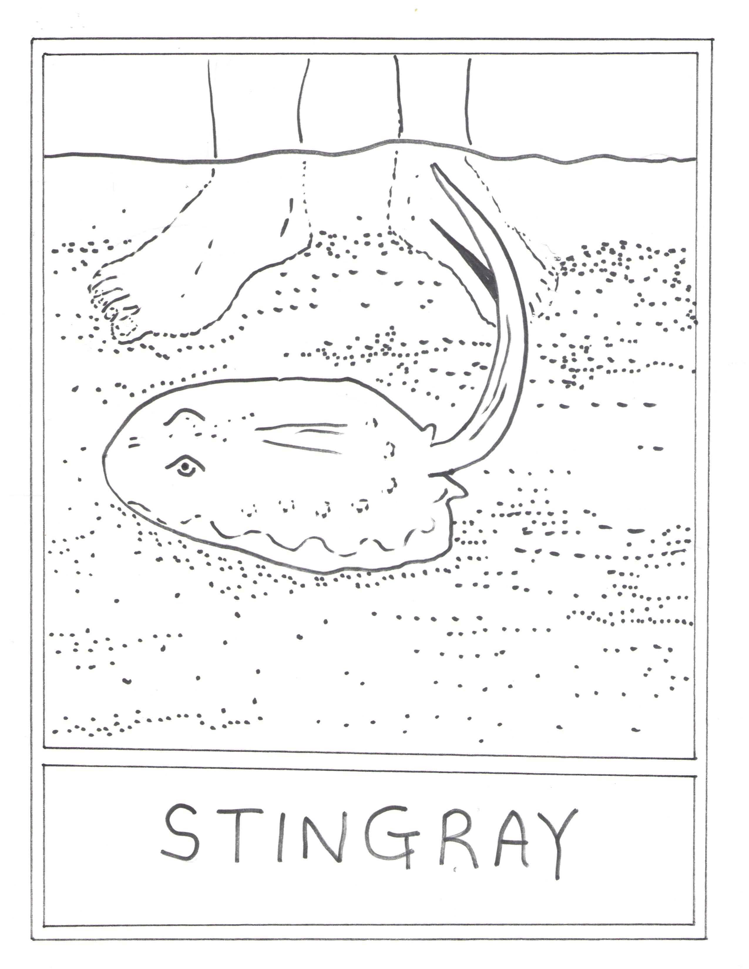 Dorable Stingray Anatomy Diagram Ideas - Anatomy and Physiology ...
