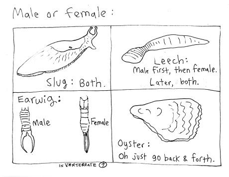 male female invert
