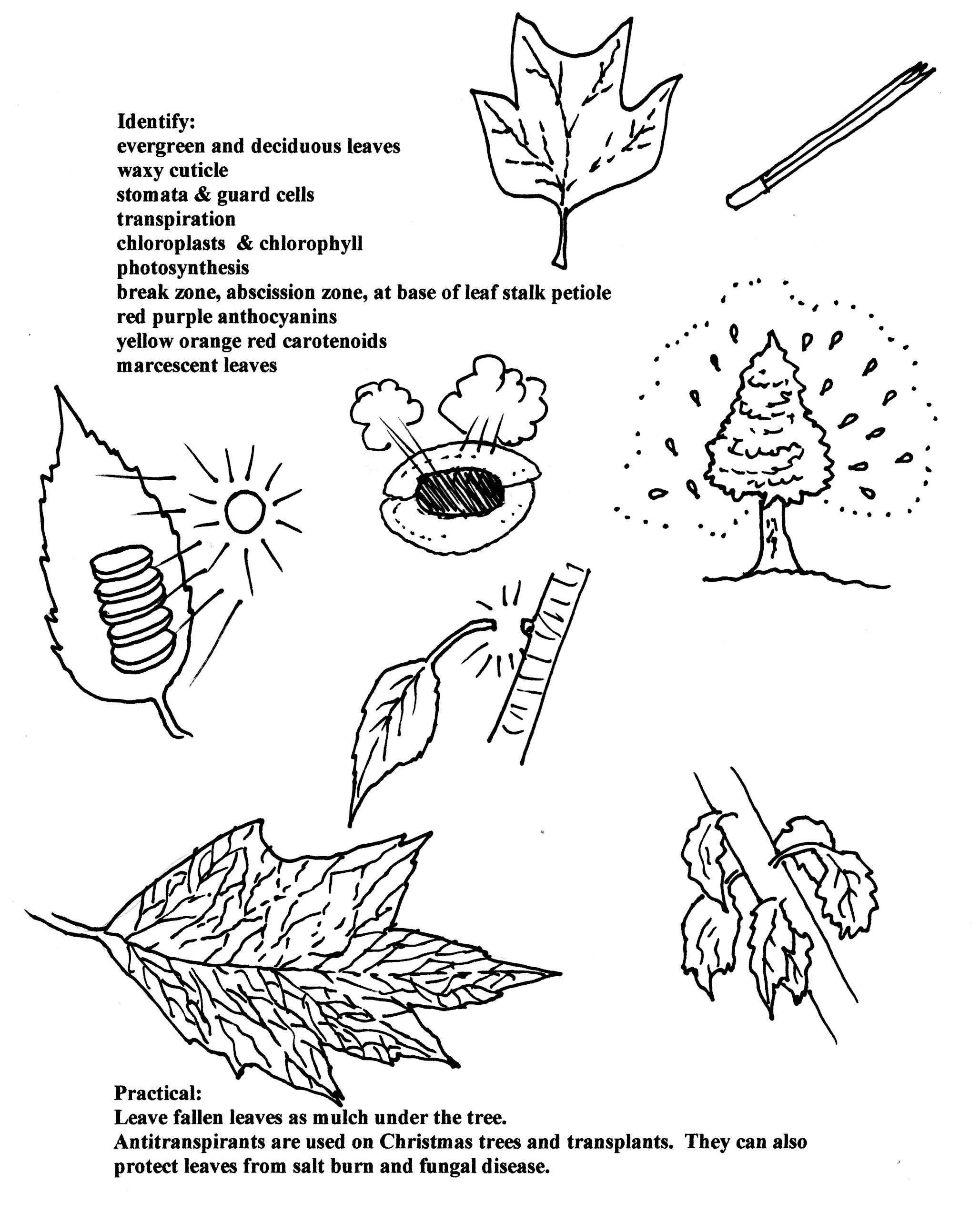 40 trees u2013 some basic vocabulary mission azul
