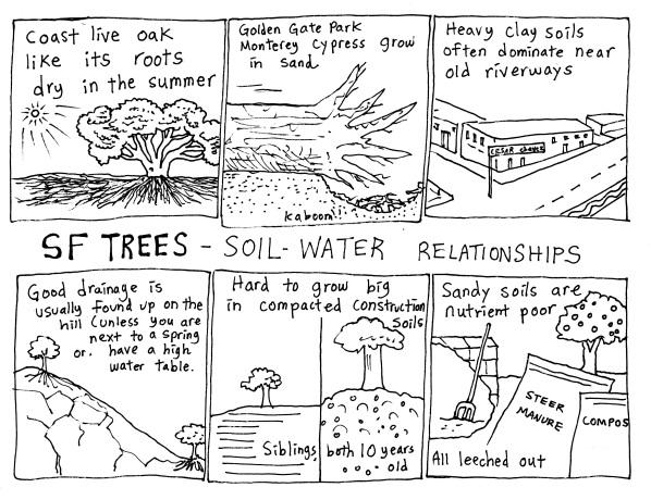 sf trees