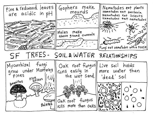 tree soil water 2