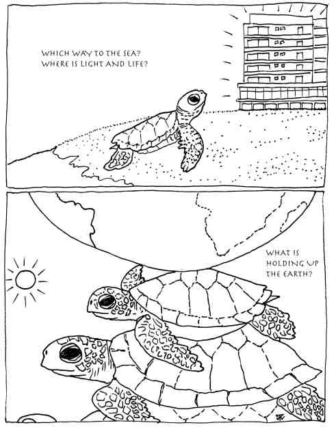 turtleconservation EGNLISH sm