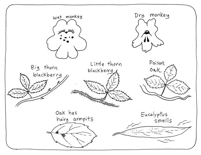 common plants