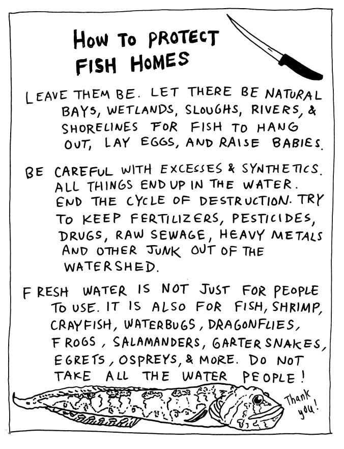 fish13.jpeg