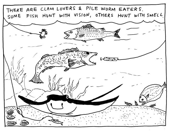 fish4.jpeg
