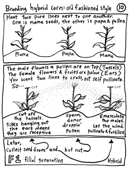 seed10